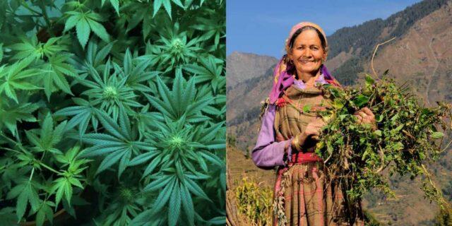 Legalise Cannabis 1